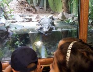 blackpool zoo 008