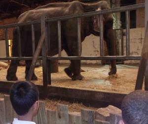 blackpool zoo 011