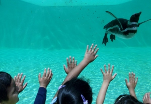 blackpool zoo 018