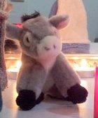 donkey 14